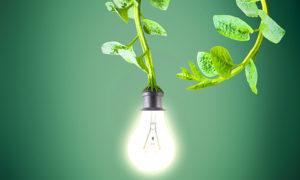 plant-e-energia-1